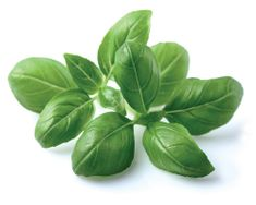 Click and Grow náplň pre smart kvetináče a farmy - Bazalka, 3ks v balení