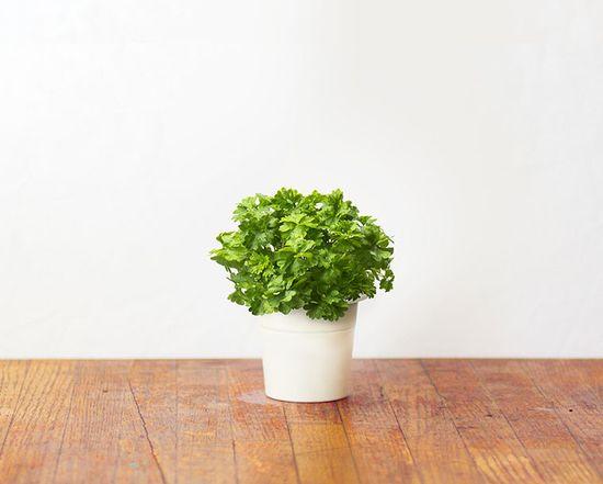 Click and Grow náplň pro smart květináče a farmy - Petržel, 3ks v balení