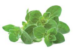 Click and Grow náplň pre smart kvetináče a farmy - Oregano, 3ks v balení