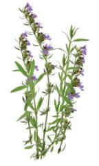 Click and Grow náplň pro smart květináče a farmy - Yzop lékařský, 3ks v balení