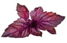 Click and Grow náplň pre smart kvetináče a farmy - Červená bazalka, 3ks v balení