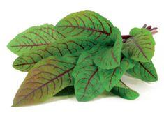 Click and Grow náplň pro smart květináče a farmy - Štovík krvavý, 3ks v balení