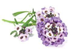 Click and Grow náplň pre smart kvetináče a farmy - Lobulária prímorská 3ks v balení