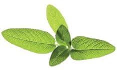 Click and Grow náplň pro smart květináče a farmy - Šalvěj, 3ks v balení