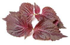 Click and Grow náplň pro smart květináče a farmy - Perila (Bazalka čínská), 3ks v balení