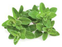 Click and Grow náplň pre smart kvetináče a farmy - Majoránka, 3ks v balení