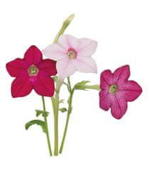 Click and Grow náplň pro smart květináče a farmy - Sladký tabák, 3ks v balení
