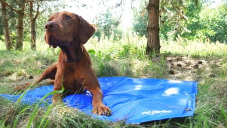 Argi hladilna blazina za psa, 50 x 90 cm