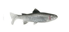 Unicat Gumová Nástraha Trout BG 15 cm 50 g 2 ks