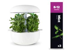 Plantui náplň pro smart květináč - Máta, 3ks v balení