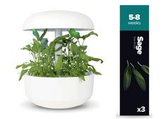 Plantui náplň pro smart květináč - Šalvěj, 3ks v balení