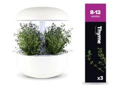 Plantui náplň pro smart květináč - Tymián, 3ks v balení