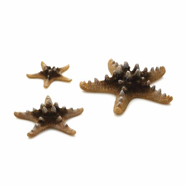 Oase Akvarijní dekorace mořské hvězdice přírodní