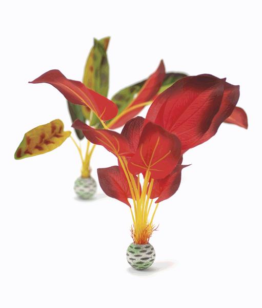 Oase Sada vodních rostlin červeno-zelená velká