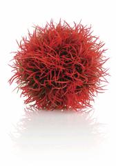 Oase Barevná vodní tráva červená