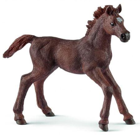 Schleich figurka-koń źrebię, Rasa angielska 13857