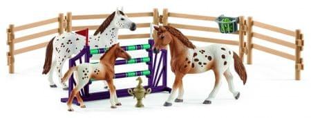 Schleich Set appalosské kone a tréningové príslušensto 42433