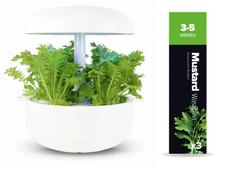 Plantui náplň pro smart květináč - Mustard Wasabina, hořčice indická, 3ks v balení