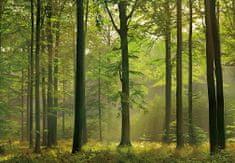 Walplus Tapeta Peaceful Woods Trail, 366 x 254 cm
