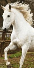 Jerry Fabrics Osuška White horse