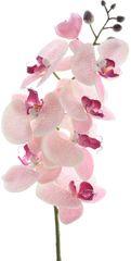 Kaemingk Orchidej mnohokvětá, světle růžová, 77 cm