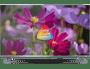 23 - TCL 4K LED TV sprejemnik 55DP660, Android 7.0
