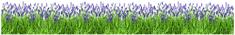 Crearreda stenska dekorativna nalepka v roli, lavanda (53012)
