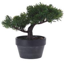Marex Trade Bonsai v květináči 20 cm, tvar č.2