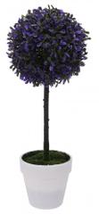 Koopman Zimostráz na kmínku v bílém květináči, 45 cm, purpura