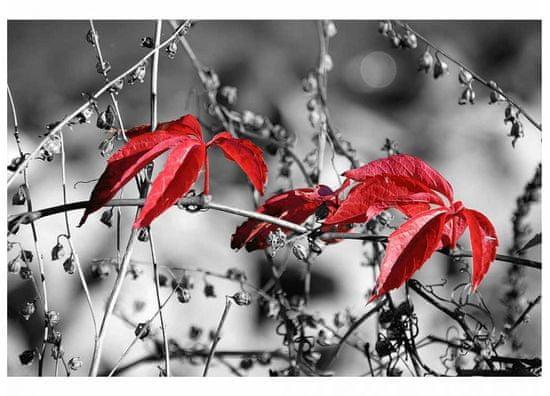 Dimex Fototapeta MS-5-0110 Červené listy v šedom 375 x 250 cm