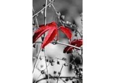 Dimex Fototapeta MS-2-0110 Červené listy v šedom 150 x 250 cm
