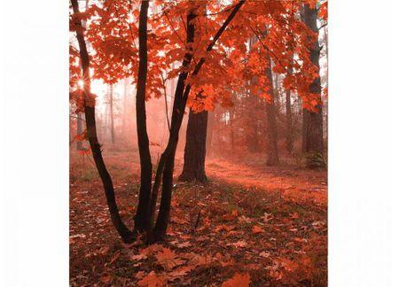 Dimex Fototapeta MS-3-0095 Hmlistý les 225 x 250 cm