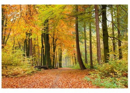 Dimex Fototapeta MS-5-0099 Jesenný les 375 x 250 cm