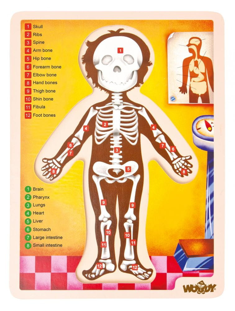 Woody Puzzle - lidské tělo AJ