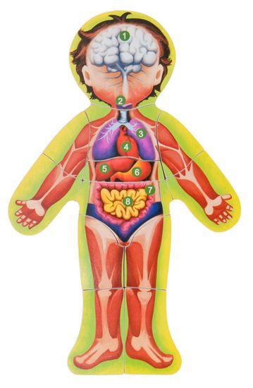 Woody sestavljanka - človeško telo AJ