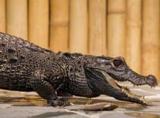 Poukaz Allegria - krmení krokodýlů pro dva Praha