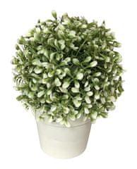 Koopman dekorativni cvet v loncu, 20 cm