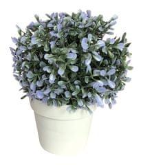 Koopman dekorativni cvet v loncu, 20 cm, moder