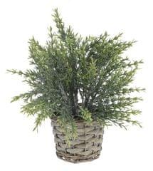 Marex Trade dekoracyjna roślina z plecioną donicą, dekor 3