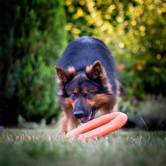 Akinu výcvik kruh velký pro psy oranžový