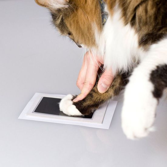 Pearhead odtis tačke s črnilom Clean Touch, črn