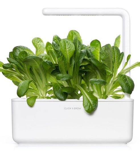 Click and Grow Római saláta, növénykapszulák és szubsztrátum, 3 db
