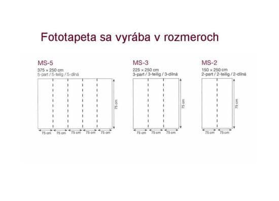 Dimex Fototapeta MS-5-5010-SK Čiernobiele kvety 375 x 250 cm