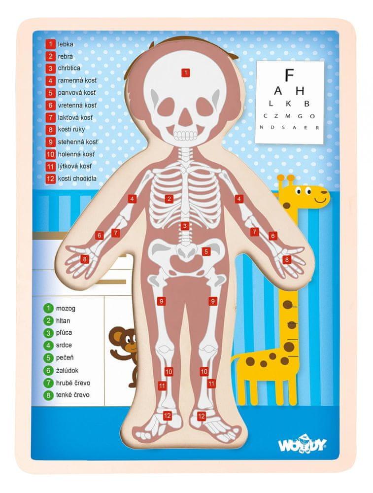 Woody Puzzle Lidské tělo - Kluk SK
