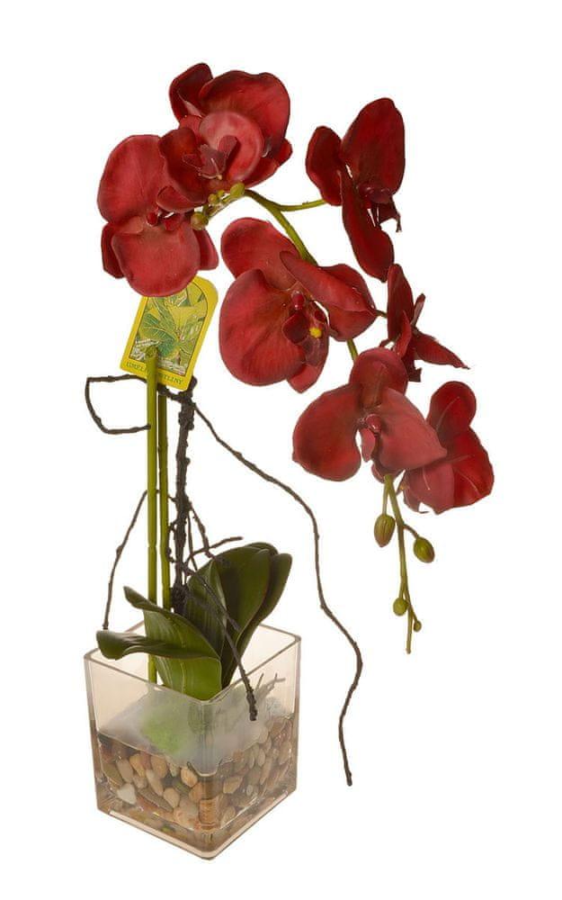 EverGreen Orchidea ve skle, výška 56 cm