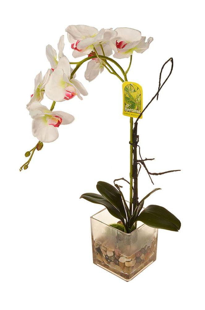 EverGreen Orchidea ve skle, výška 56 cm 3