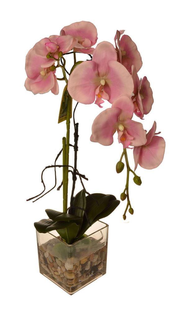 EverGreen Orchidea ve skle, výška 56 cm 2