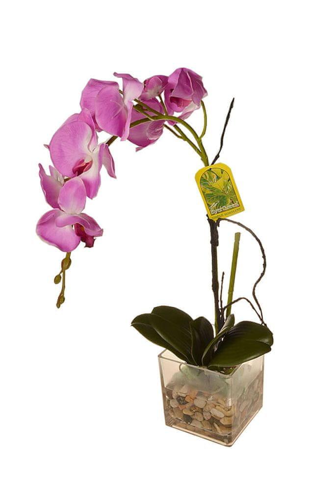 EverGreen Orchidea ve skle, výška 56 cm 4