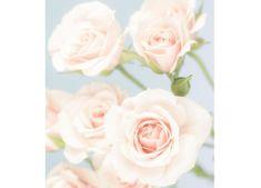 Dimex Fototapeta MS-3-5004-SK Ruže 225 x 250 cm