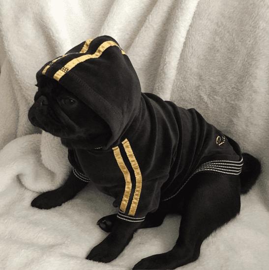 Doggy Dolly pulover Royal Divas, črn